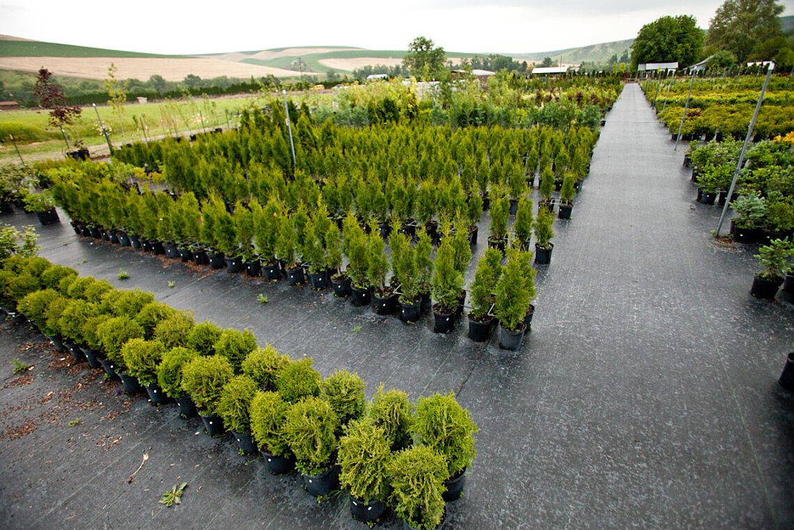 Shrubs at Ace Landscaping